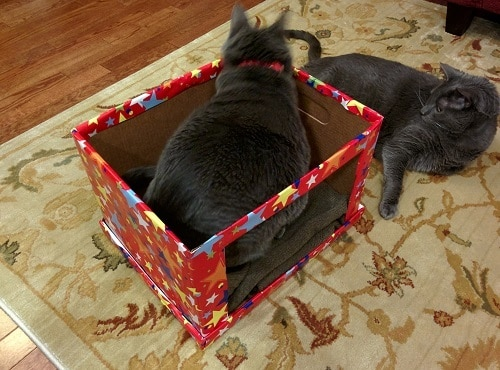 Two gray cats lie around DIY cardboard cat bed covered in red fabric with different colored stars.
