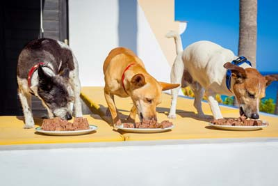 3-dogs-eating-wet-dog-food-off-plates