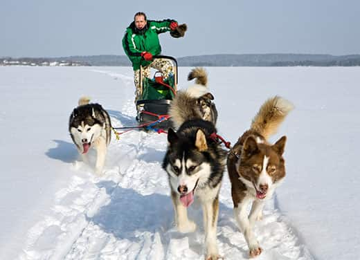 Team of dog sled huskies pulls man and sled across wintery landscape.