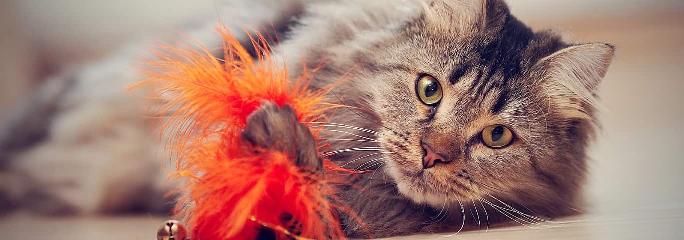 Fluffy cat playing with orange toy
